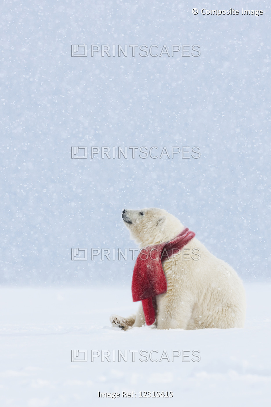 Composite: Polar Bear With Red Scarf Sitting In A Snowstorm