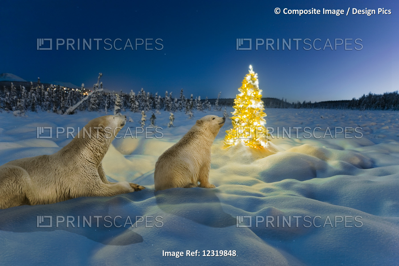 Composite Polar Bear Sow And Cub And Christmas Tree On Snow Covered Tundra At ...